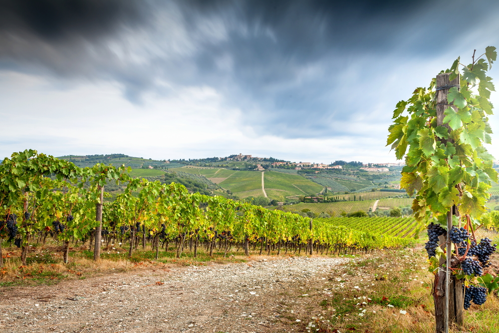 A Brief Guide to Chianti Classico Wine