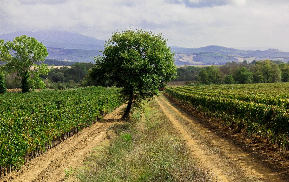 4 ragioni per visitare Gavorrano in Toscana