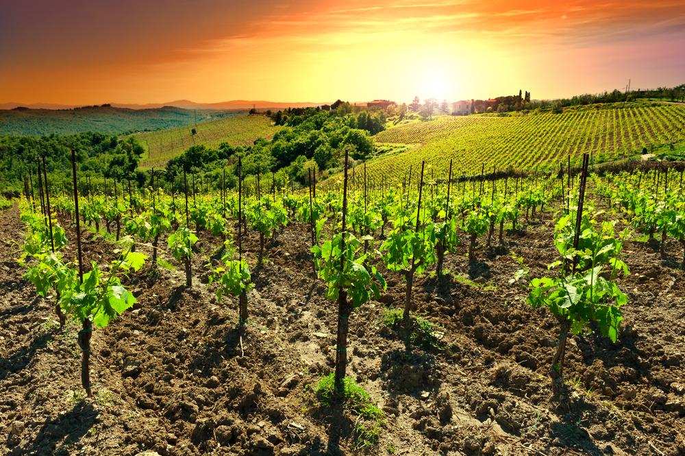 Let It Wine Quotes Plato