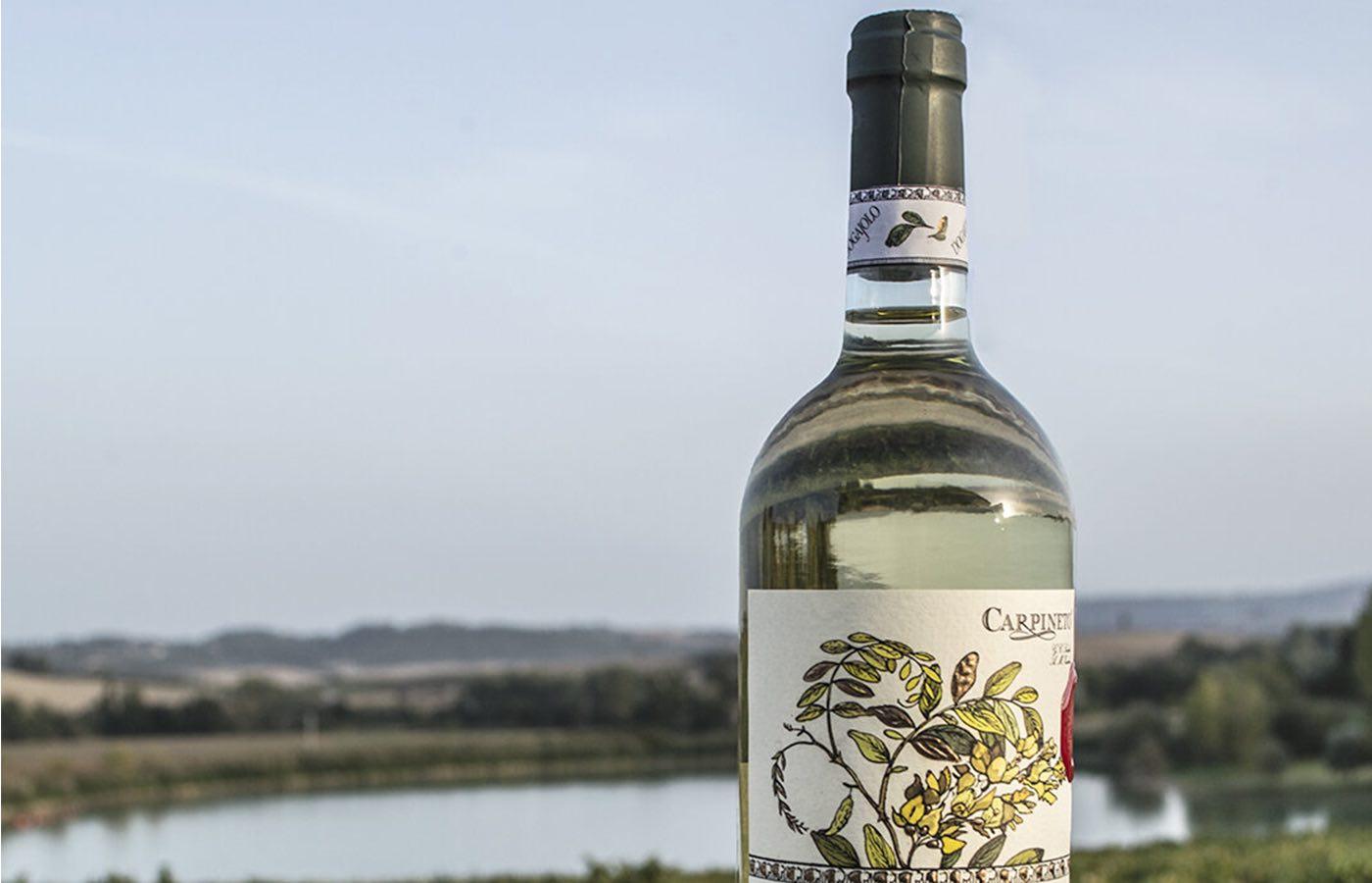 Dogajolo Toscano Bianco: il vino perfetto per brindare alla Primavera che sboccia