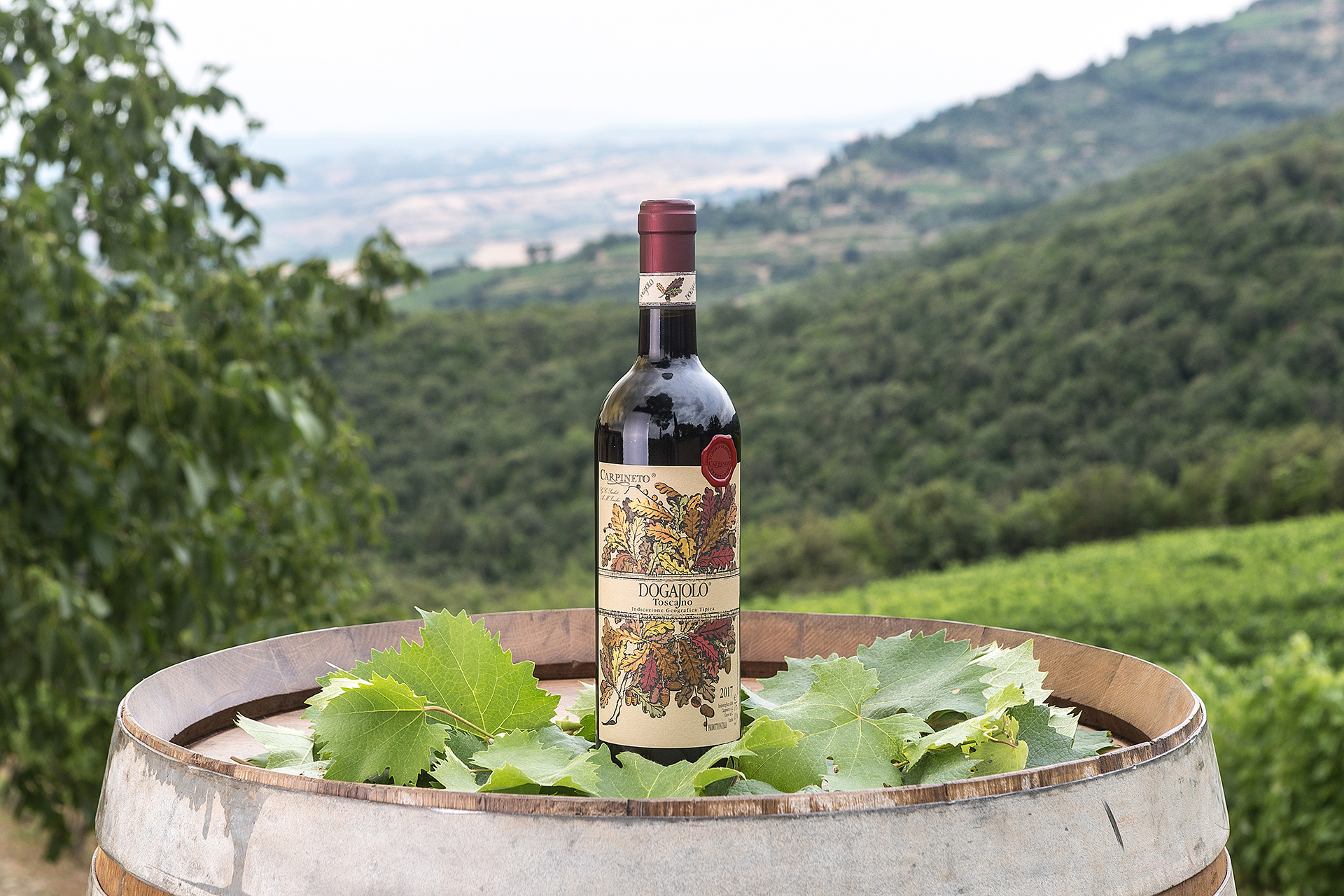 Dogajolo Toscano Rosso IGT: il vino giusto per celebrare la Giornata Mondiale dell'Ambiente