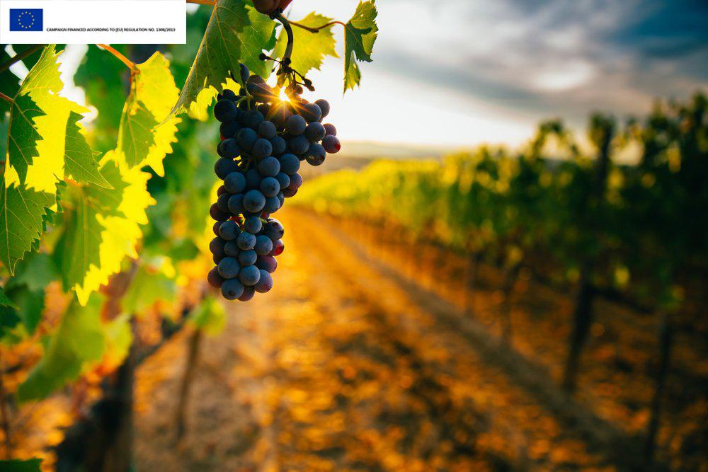 The 4 Pillars of Italian Wine